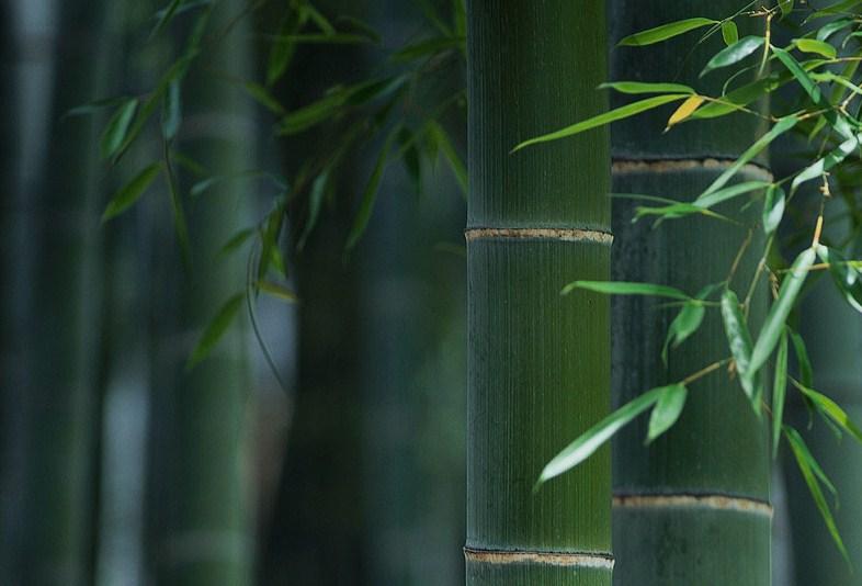 Filsafat Bambu Vs Filsafat Padi Rumah Sanjiwani